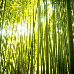 sources-pnl-bamboos